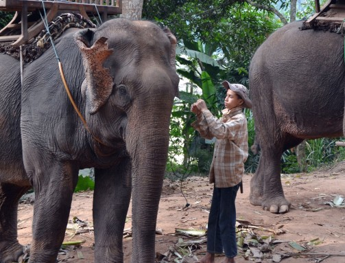 boy mahout with hat