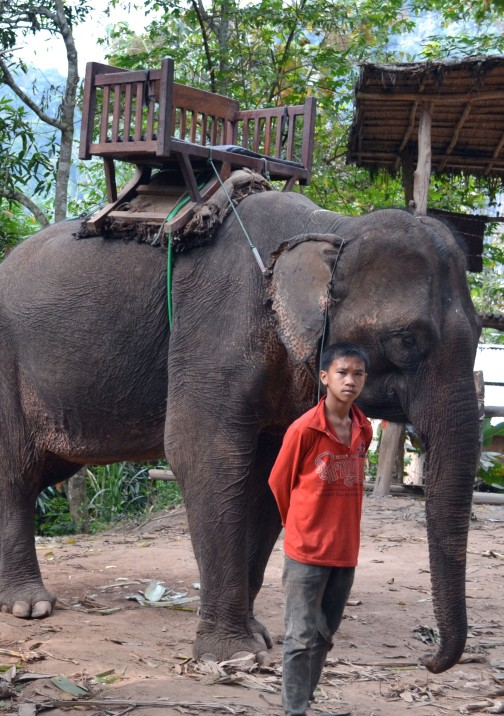 Boy mahout in red